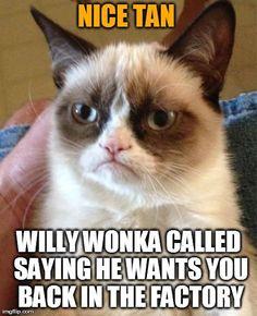 Grumpy Cat...calls em like he sees em!