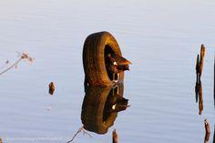 sacconefilippofotoblog: 23 Febbraio 2014 Trezzo & Dintorni