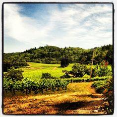 .@napavalleyinc Mt. Veeder Napa Valley view across the vineyards and hills.
