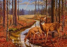 """""""After The Rain"""" - Whitetail Deer"""