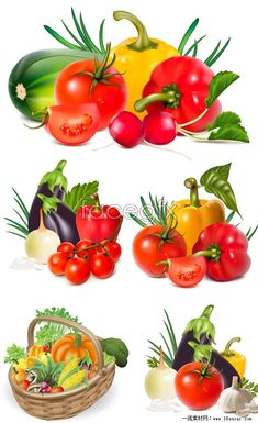 6 fresh vegetables vector map