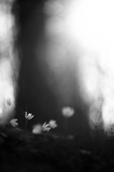 ☾ Midnight Dreams ☽ dreamy dramatic black and white photography -