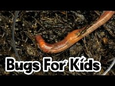 Worms For Kids - YouTube