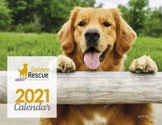 Our 2021 Calendar ALMOST SOLD OUT! This beautiful full-colour calendar is a wonderful tribute to our rescues. Each month features new Goldens and some very special dates. Don't miss out! Order yours TODAY by emailing grstore@goldenrescue.ca #goldenretriever #2021calendar #rescuedog #ordertoday #grstore Best Stocking Stuffers, 2021 Calendar, Rescue Dogs, Fundraising, Adoption, Great Gifts, Dates, Colour, Animals