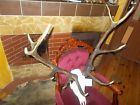 ⌂¤ #LARGE RED DEER #ANTLERS & SKULL,INTERIOR DESIGN,COLLECTABLE Why pay more http://ebay.to/2uqxoqr