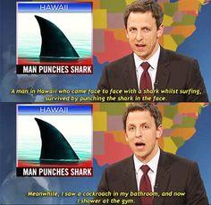 Man punches shark…