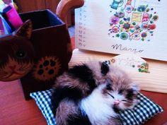"""Ancora la scrivania di Lucia R. e la sua """"leggera"""" fissa per i gatti..."""