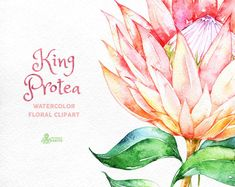 Watercolor floral Clipart wedding by OctopusArtis Watercolor Cards, Watercolor Background, Watercolor Print, Watercolor Illustration, Protea Art, Protea Flower, Floral Invitation, Floral Wedding Invitations, King Protea