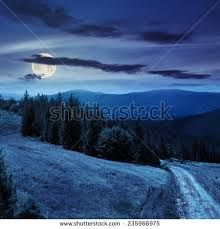 Image result for alpine forest in the moonlight