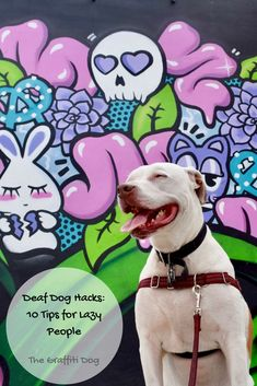 33 Best Dogs Street Art Graffiti Images Deaf Dog Street Art