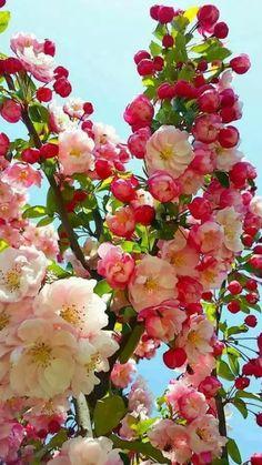 Flores bonitas | Pretty flowers