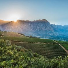 Stellenbosch is to South African wine much like Napa is to Californian wine. Explore a detailed guide to the region's best wine growing areas –by Wine Folly South African Wine, Wine Folly, The Good Place, Places, Travel, Wine, Viajes, Trips, Traveling
