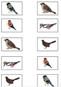 Shoe Rack, Bird, Animals, Animales, Animaux, Shoe Racks, Birds, Animal, Animais