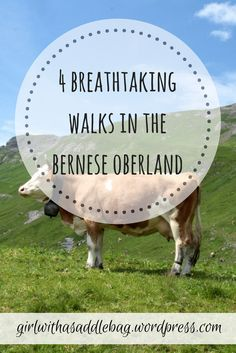 4 breathtaking walks in the Bernese Oberland, Switzerland - discover where to find the most exciting trails, beautiful villages and incredible views in our guide to hiking around the Lauterbrunnen and Grindelwald valleys.