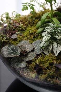 Paris based terrarium store.  Here with an interesting grouping of plants to consider
