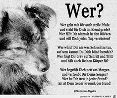Am 10. Oktober ist Welthundetag!