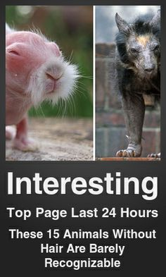 Top Interesting link on telezkope.com. With a score of 7688. --- These 15 Animals Without Hair Are Barely Recognizable. --- #telezkopeinteresting --- Brought to you by telezkope.com - socially ranked goodness