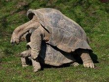 animals - Bing Images