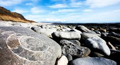 ammonite - Look for fossils at Lyme Regis (Dorset)