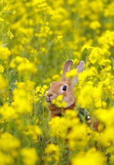 konijn in bloemenweide