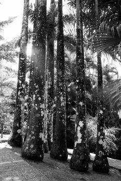 """Photographie noir et blanc """"les troncs champignons"""" martinique, mai 2015 : Photos par le-petit-bazar-des-trinomettes-en-delire"""