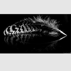 Feather in the dark , reflection