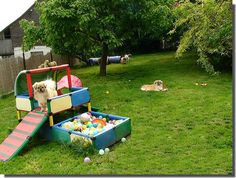 puppy playground ideas