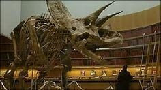 Dinosaur skeleton auctioned