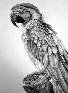Realistic Animal Pencil Drawings (8)