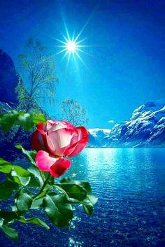 Mothers Day Roses, Wallpaper Nature Flowers, Good Night Image, Good Morning Greetings, Photo Illustration, Beautiful Roses, Artwork, Painting, Cuba