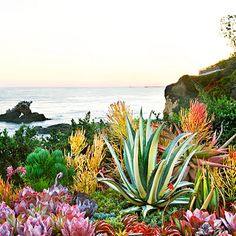 Garden Landscaping Create a sea-creature succulent garden - Boldly colored. With the wonderful world of unusual succulents, you can mimic an underwater look with plants. Succulent Landscaping, Succulent Gardening, Planting Succulents, Garden Landscaping, Landscaping Ideas, Succulent Ideas, Tropical Landscaping, Succulent Plants, Types Of Succulents