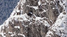 """This is """"Kamzik / chamois"""" by Arolla Film on Vimeo, the home for high quality videos and the people who love them. Mount Everest, Mountains, Nature, Travel, Outdoor, Voyage, Outdoors, Viajes, Traveling"""
