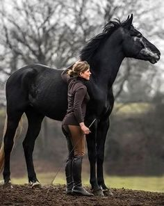 Look how beautiful is this horse!! ♥