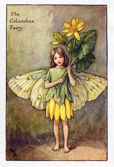The CELANDINE Fairy ~ Cicely Mary Barker ~