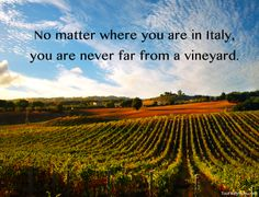 Have you visited a #vineyard during your trip to Italy?