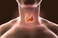(adsbygoogle = window.adsbygoogle || []).push();   ¿Has escuchado hablar alguna vez deHashimoto? Estaenfermedadestambién conocida como tiroiditis linfocítica crónica otiroiditis crónica, es una enfermedadautoinmune. Al padecerla,el sistema inmunológico ataca la glándula...