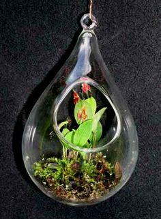 mini orchid into a teardrop terrarium