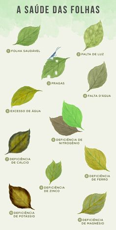 Deficiências nutricionais das folhas