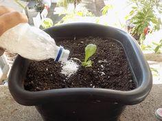 Como produzir farinha de ossos, adubo poderoso, rico em fósforo para pomar e horta! - YouTube