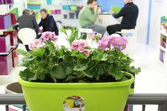 Plastkon tradeshows Balcony Garden, Trade Show, Plants, Plant, Balcony Gardening, Planets
