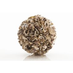 ARTERIORS Home Kosta Authentic Oyster Shell Sphere in Natural $180.00 (Varies with options)