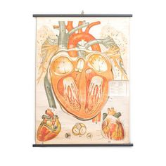 Antique Anatomical Heart Chart