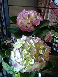 We most all the time have fresh Hydrangeas available by the stem.