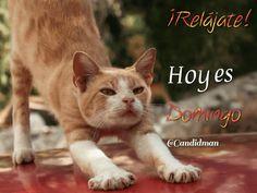 Relájate! Hoy es Domingo @Candidman #Frases Humor Candidman Domingo @candidman