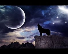 Wolf Howling at the Moon Under a Star-Lit Sky.
