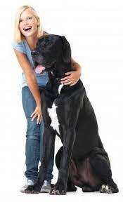 Big ole doggie..love. Love. Love. Great Danes.