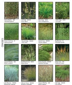 As I suspected, this looked familiar. It is a page from the older Missouri Wildflower Nursery catalog - see their more complete listing with descriptions here: http://mowildflowers.net/Grasses_c_17.html, if you click on the photos, of each of the grasses they offer. They carry only plants with Missouri genes, so they can only thrive well east of the Rockies.
