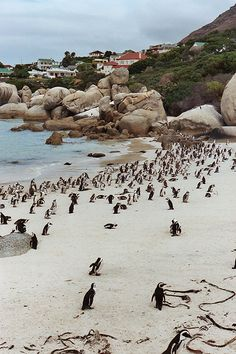 Boulders Beach, South Africa. Because sometimes you just need to swim with a penguin.