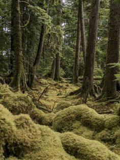 Off the coast of British Columbia, the protectors of North Pacific indigenous culture connect with the past while embracing the future on Canada's remote Haida Gwaii archipelago. Cedar Forest, Freaky Deaky, Haida Gwaii, Vancouver Island, Archipelago, Pacific Northwest, British Columbia, Where To Go, West Coast