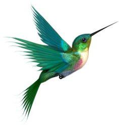 Free Printable Hummingbird Coloring